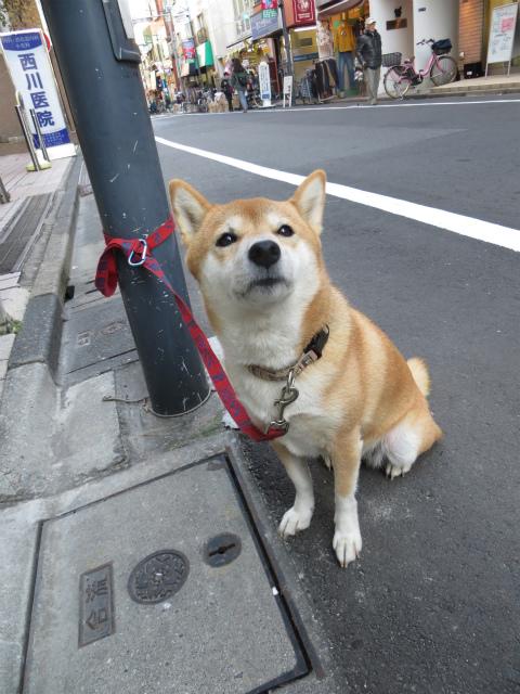 旗の台付近の犬